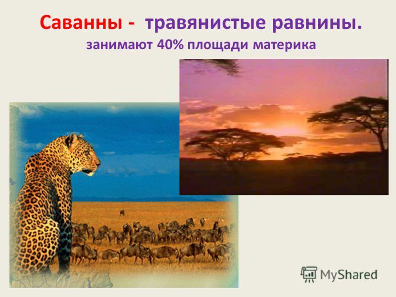 Саванны - травянистые равнины. занимают 40% площади материка