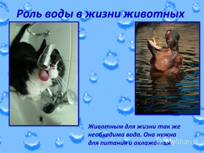 Роль воды в жизни животных Животным для жизни так же необходима вода. Она нужна для питания и охлаждения