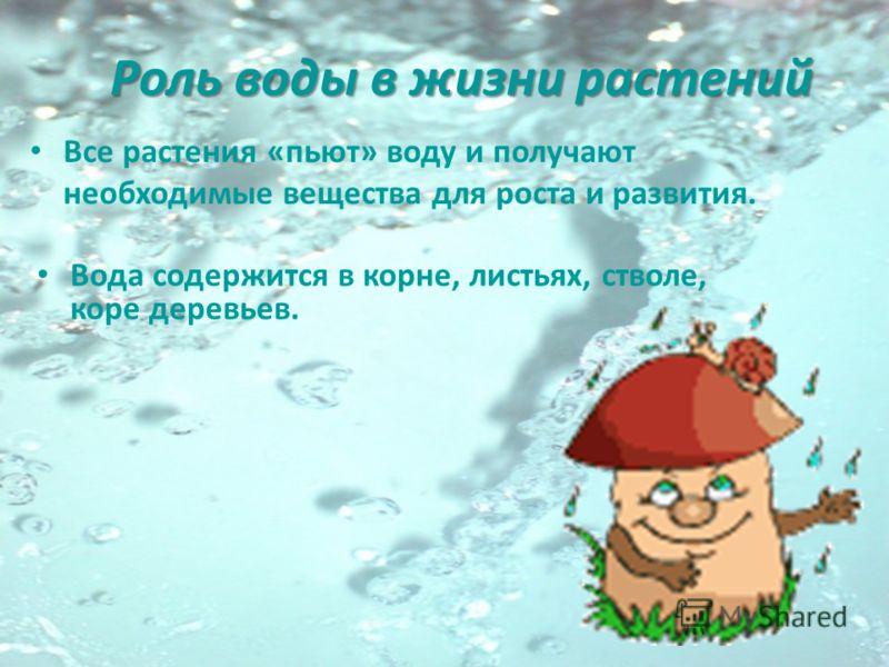 Роль воды в жизни растений Все растения «пьют» воду и получают необходимые вещества для роста и развития. Вода содержится в корне, листьях, стволе, коре деревьев.