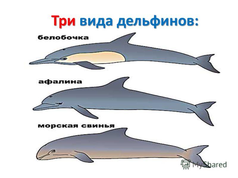Три вида дельфинов: