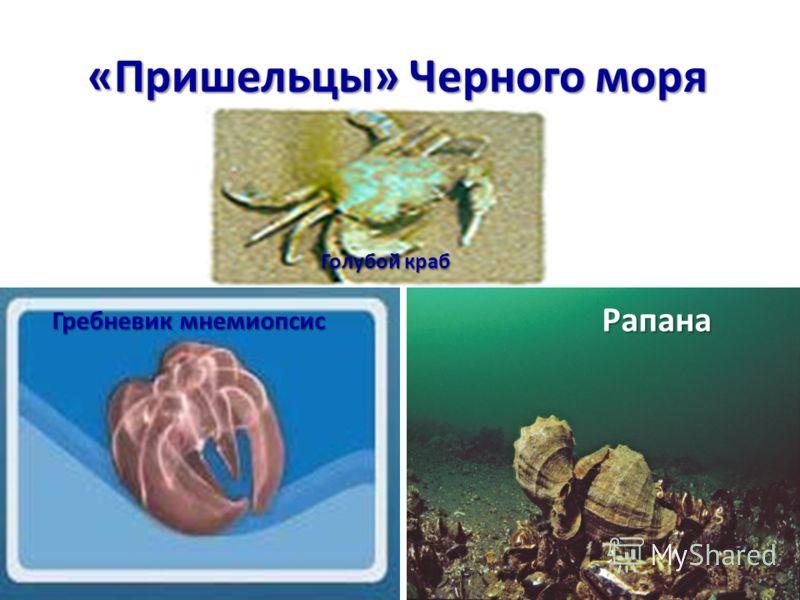 «Пришельцы» Черного моря Голубой краб Рапана Гребневик мнемиопсис