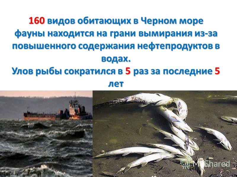 160 видов обитающих в Черном море фауны находится на грани вымирания из-за повышенного содержания нефтепродуктов в водах. Улов рыбы сократился в 5 раз за последние 5 лет