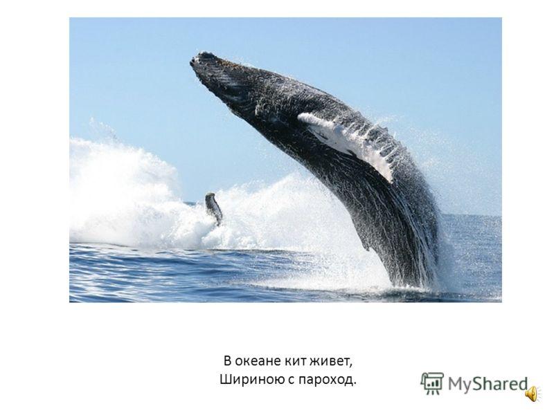 Дельфины очень умные животные. Они любят людей.