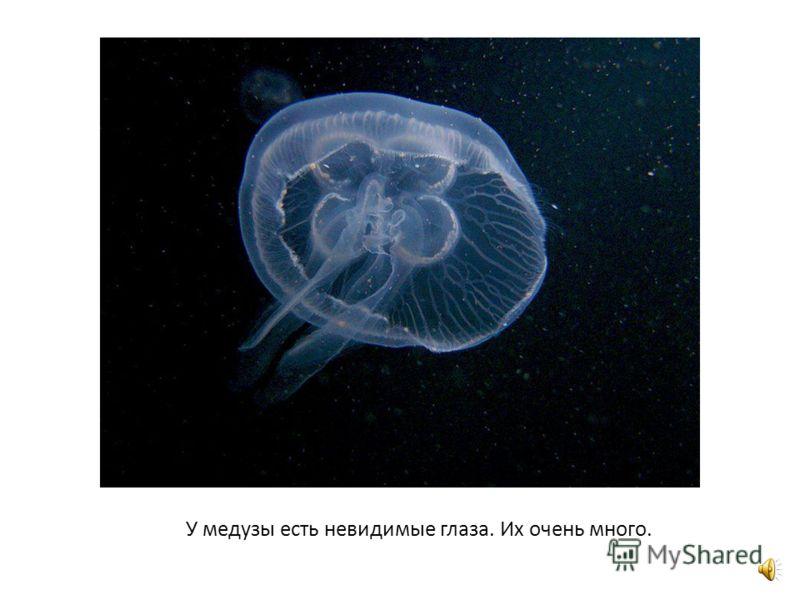 Хоть с виду большая медуза красива, Но жалит медуза, как будто крапива.