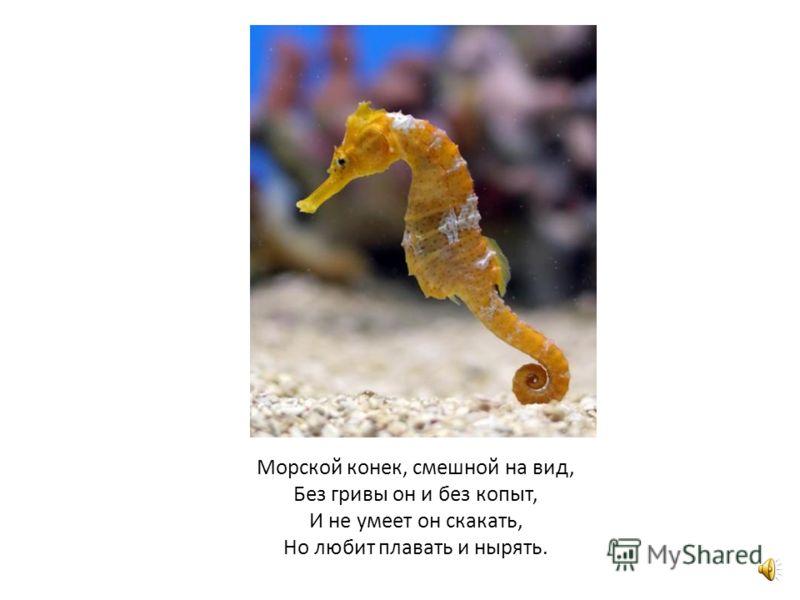 У медузы есть невидимые глаза. Их очень много.