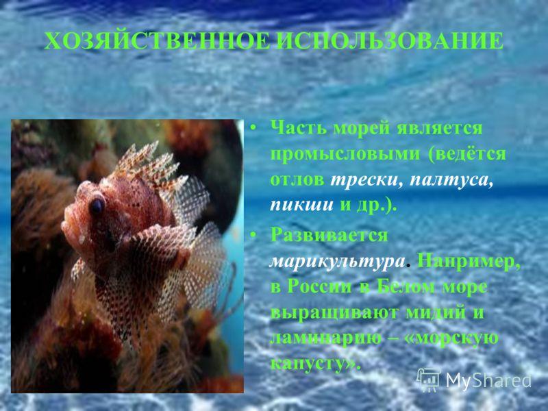 ХОЗЯЙСТВЕННОЕ ИСПОЛЬЗОВАНИЕ Часть морей является промысловыми (ведётся отлов трески, палтуса, пикши и др.). Развивается марикультура. Например, в России в Белом море выращивают мидий и ламинарию – «морскую капусту».