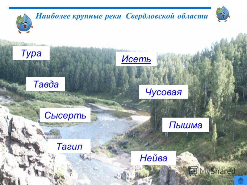 Наиболее крупные реки Свердловской области Тура Сысерть Тагил Чусовая Пышма Нейва Исеть Тавда