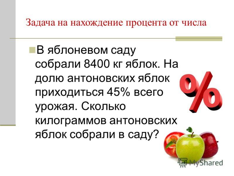 В яблоневом саду собрали 8400 кг яблок. На долю антоновских яблок приходиться 45% всего урожая. Сколько килограммов антоновских яблок собрали в саду? Задача на нахождение процента от числа