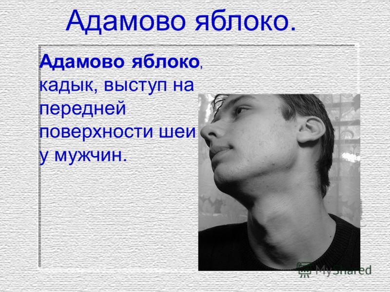 Адамово яблоко. Адамово яблоко, кадык, выступ на передней поверхности шеи у мужчин.