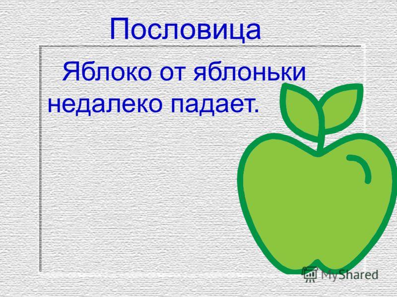 Пословица Яблоко от яблоньки недалеко падает.