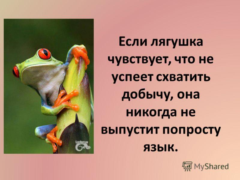 Если лягушка чувствует, что не успеет схватить добычу, она никогда не выпустит попросту язык.