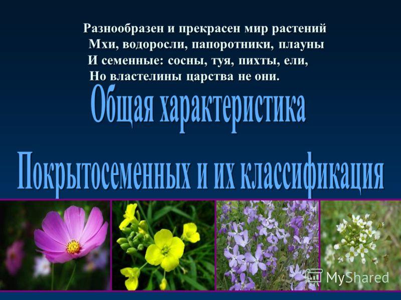 Разнообразен и прекрасен мир растений Мхи, водоросли, папоротники, плауны И семенные: сосны, туя, пихты, ели, Но властелины царства не они. Разнообразен и прекрасен мир растений Мхи, водоросли, папоротники, плауны И семенные: сосны, туя, пихты, ели,