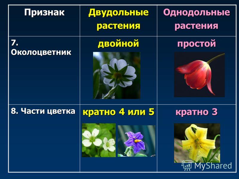 ПризнакДвудольныерастенияОднодольныерастения 7. Околоцветник двойнойпростой 8. Части цветка кратно 4 или 5 кратно 3