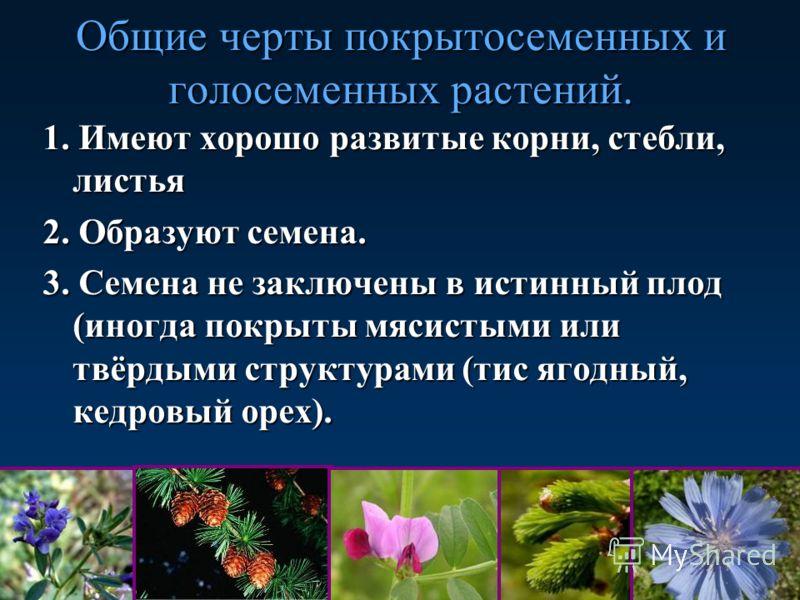 Общие черты покрытосеменных и голосеменных растений. 1. Имеют хорошо развитые корни, стебли, листья 2. Образуют семена. 3. Семена не заключены в истинный плод (иногда покрыты мясистыми или твёрдыми структурами (тис ягодный, кедровый орех).
