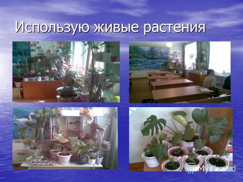 Использую живые растения
