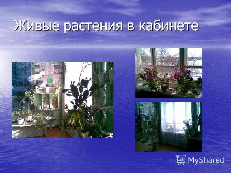 Живые растения в кабинете