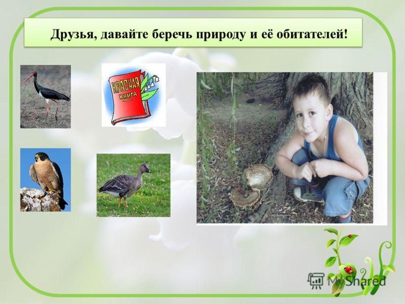 Друзья, давайте беречь природу и её обитателей!