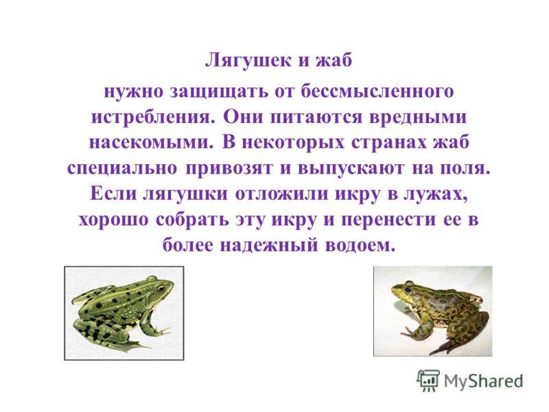 Лягушек и жаб нужно защищать от бессмысленного истребления. Они питаются вредными насекомыми. В некоторых странах жаб специально привозят и выпускают на поля. Если лягушки отложили икру в лужах, хорошо собрать эту икру и перенести ее в более надежный