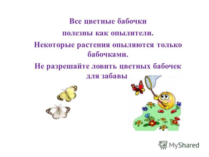 Все цветные бабочки полезны как опылители. Некоторые растения опыляются только бабочками. Не разрешайте ловить цветных бабочек для забавы.