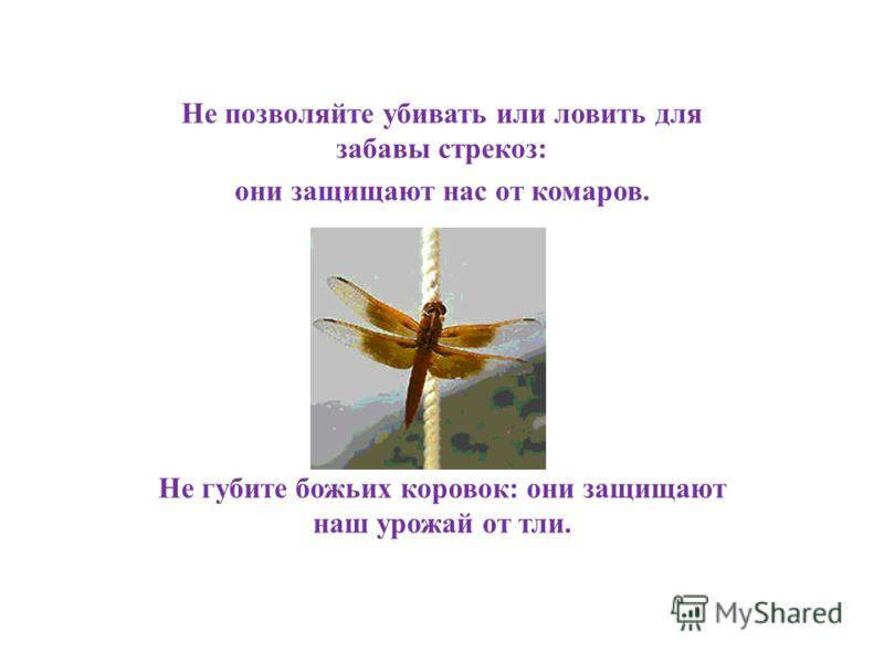 Не позволяйте убивать или ловить для забавы стрекоз: они защищают нас от комаров. Не губите божьих коровок: они защищают наш урожай от тли.