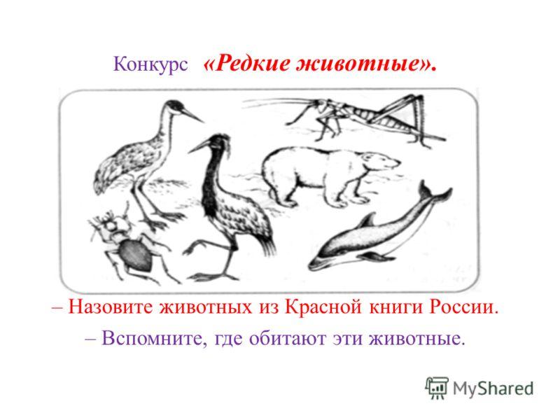 Конкурс «Редкие животные». – Назовите животных из Красной книги России. – Вспомните, где обитают эти животные.