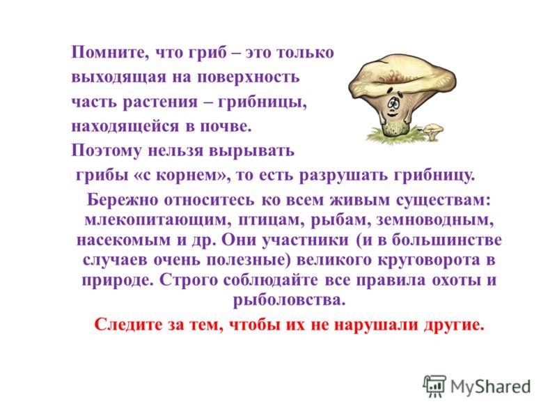 Помните, что гриб – это только выходящая на поверхность часть растения – грибницы, находящейся в почве. Поэтому нельзя вырывать грибы «с корнем», то есть разрушать грибницу. Бережно относитесь ко всем живым существам: млекопитающим, птицам, рыбам, зе