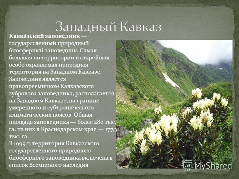 Кавка́зский запове́дник государственный природный биосферный заповедник. Самая большая по территории и старейшая особо охраняемая природная территория на Западном Кавказе. Заповедник является правопреемником Кавказского зубрового заповедника, распола