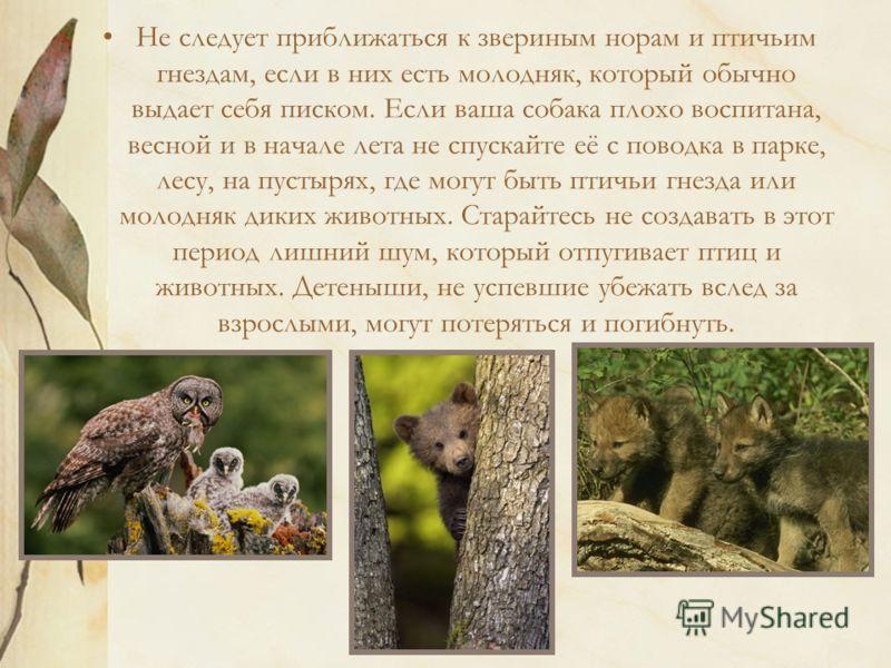 Не следует приближаться к звериным норам и птичьим гнездам, если в них есть молодняк, который обычно выдает себя писком. Если ваша собака плохо воспитана, весной и в начале лета не спускайте её с поводка в парке, лесу, на пустырях, где могут быть пти