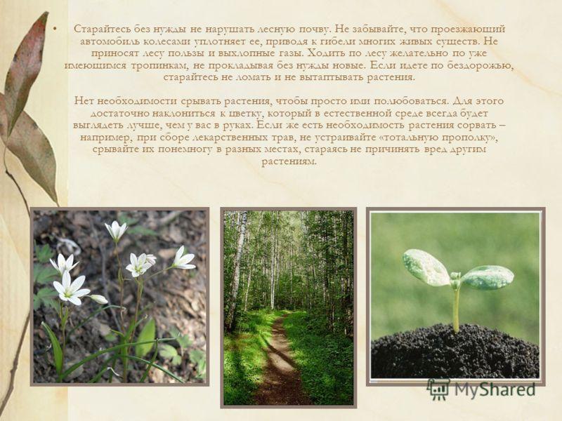 Старайтесь без нужды не нарушать лесную почву. Не забывайте, что проезжающий автомобиль колесами уплотняет ее, приводя к гибели многих живых существ. Не приносят лесу пользы и выхлопные газы. Ходить по лесу желательно по уже имеющимся тропинкам, не п