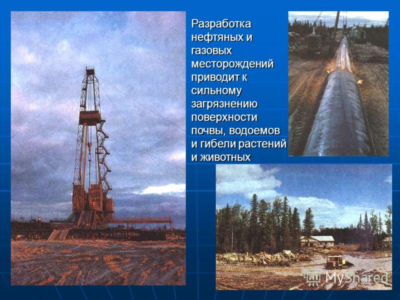 Разработка нефтяных и газовых месторождений приводит к сильному загрязнению поверхности почвы, водоемов и гибели растений и животных