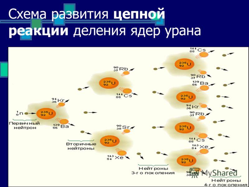 Схема развития цепной реакции деления ядер урана