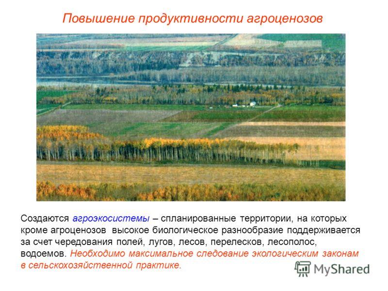 Повышение продуктивности агроценозов Создаются агроэкосистемы – спланированные территории, на которых кроме агроценозов высокое биологическое разнообразие поддерживается за счет чередования полей, лугов, лесов, перелесков, лесополос, водоемов. Необхо