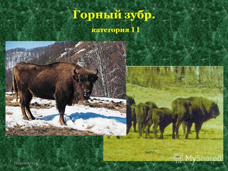 Горный зубр. категория I I Панова О.Л.11