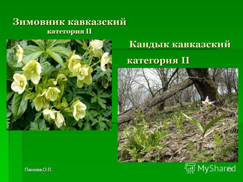 Кандык кавказский категория II Кандык кавказский категория II Зимовник кавказский категория II Панова О.Л.23