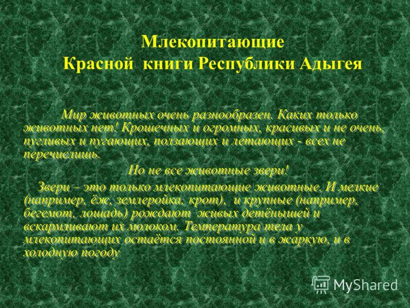 Млекопитающие Красной книги Республики Адыгея Мир животных очень разнообразен. Каких только животных нет! Крошечных и огромных, красивых и не очень, пугливых и пугающих, ползающих и летающих - всех не перечислишь. Но не все животные звери! Звери – эт