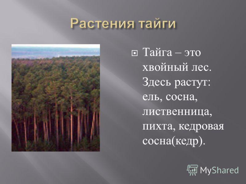 Тайга – это хвойный лес. Здесь растут : ель, сосна, лиственница, пихта, кедровая сосна ( кедр ).