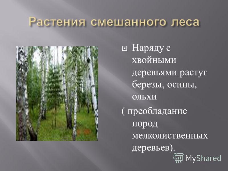 Наряду с хвойными деревьями растут березы, осины, ольхи ( преобладание пород мелколиственных деревьев ).
