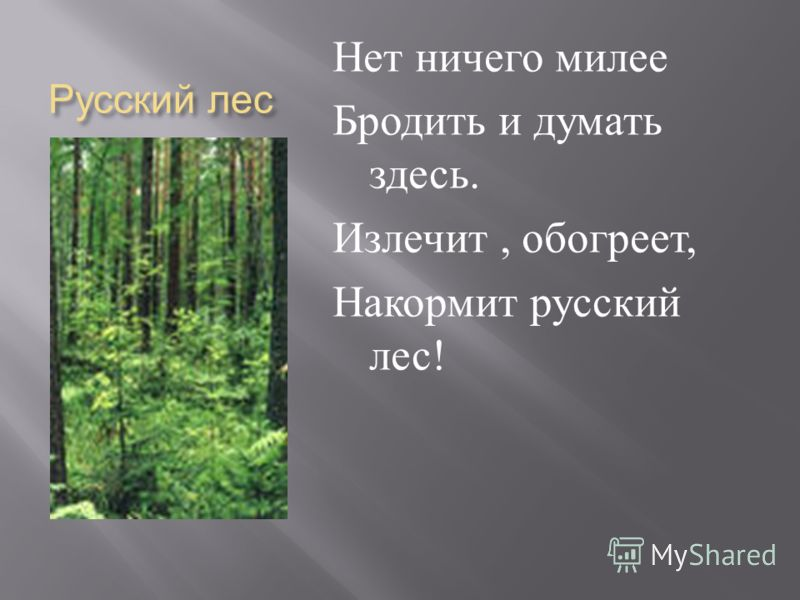 Русский лес Нет ничего милее Бродить и думать здесь. Излечит, обогреет, Накормит русский лес !