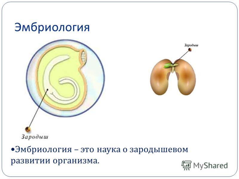Эмбриология фото