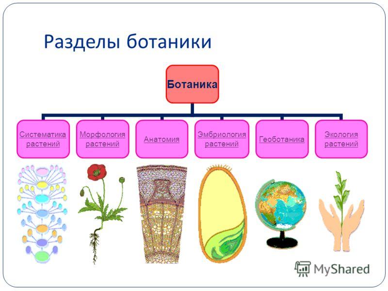 Разделы ботаники Ботаника СистематикарастенийМорфология растенийАнатомияЭмбриология растенийГеоботаникаЭкология растений