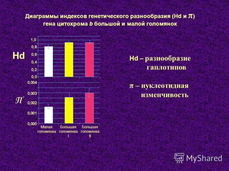 Малая голомянка Большая голомянка I Большая голомянка II Диаграммы индексов генетического разнообразия (Hd и π ) гена цитохрома b большой и малой голомянок Hd – разнообразие гаплотипов π – нуклеотидная изменчивость