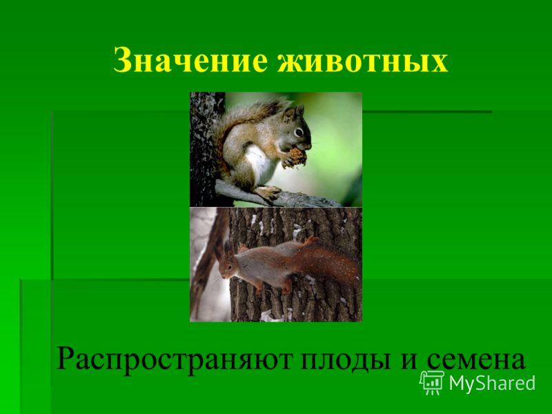 Распространяют плоды и семена Значение животных