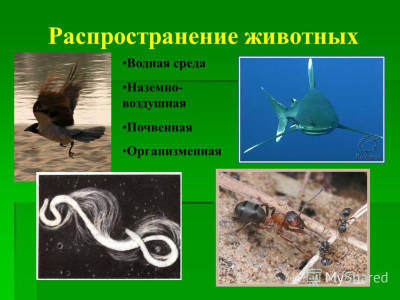 Распространение животных Водная среда Наземно- воздушная Почвенная Организменная
