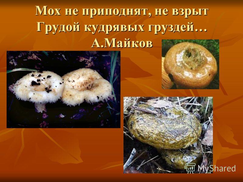 Мох не приподнят, не взрыт Грудой кудрявых груздей… А.Майков