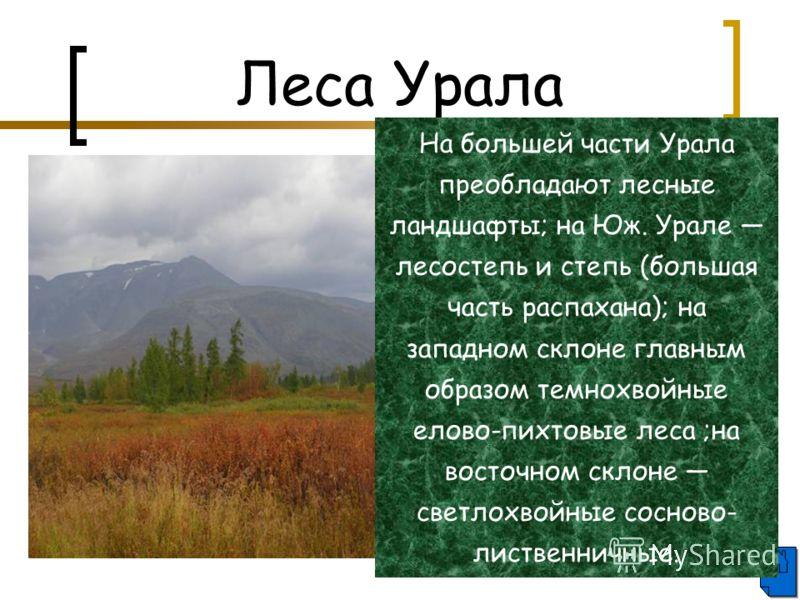 Леса Урала На большей части Урала преобладают лесные ландшафты; на Юж. Урале лесостепь и степь (большая часть распахана); на западном склоне главным образом темнохвойные елово-пихтовые леса ;на восточном склоне светлохвойные сосново- лиственничные.
