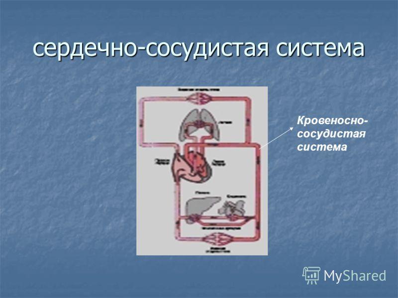 сердечно-сосудистая система Кровеносно- сосудистая система