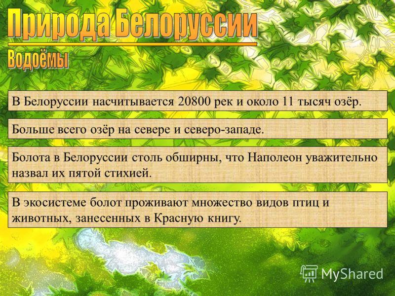 В Белоруссии насчитывается 20800 рек и около 11 тысяч озёр. Больше всего озёр на севере и северо-западе. Болота в Белоруссии столь обширны, что Наполеон уважительно назвал их пятой стихией. В экосистеме болот проживают множество видов птиц и животных