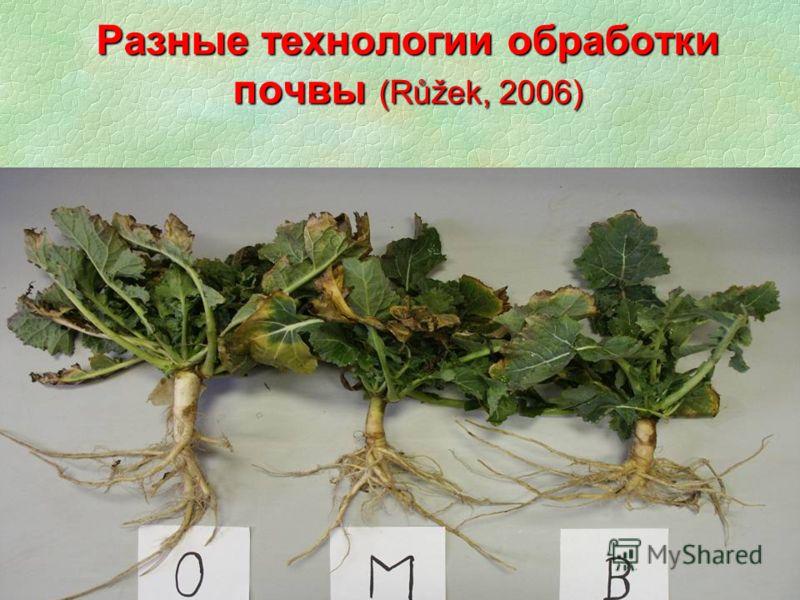 Разные технологии обработки почвы (Růžek, 2006)
