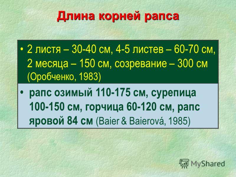 Длина корней рапса 2 листя – 30-40 см, 4-5 листев – 60-70 см, 2 месяца – 150 см, созревание – 300 см (Оробченко, 1983) рапс озимый 110-175 см, сурепица 100-150 см, горчица 60-120 см, рапс яровой 84 см (Baier & Baierová, 1985)