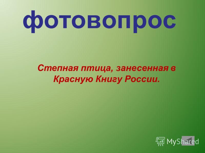 фотовопрос Степная птица, занесенная в Красную Книгу России.
